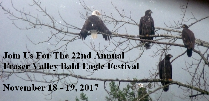 Fraser Valley Bald Eagle Festival
