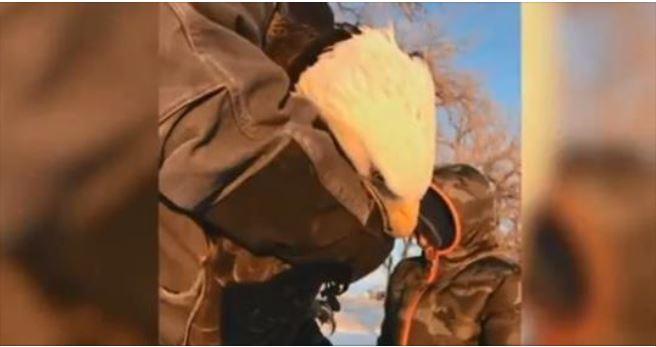 Deputy helps rescue injured bald eagle