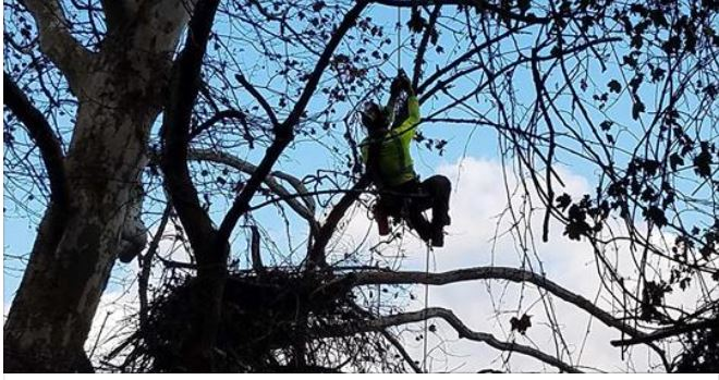 New Camera Being Installed At the Hays' Bald Eagle Nest