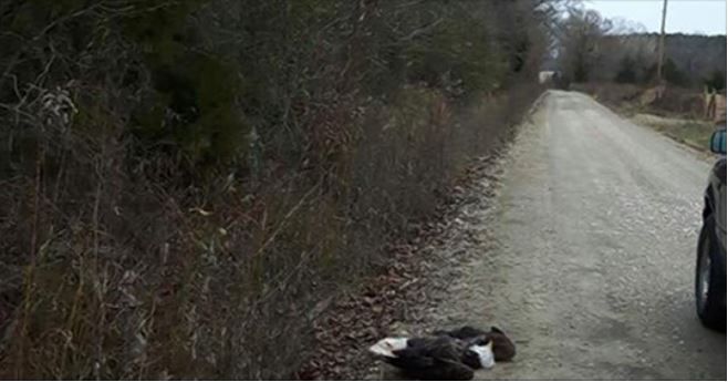 Officials searching for shooter who killed bald eagle in Oklahoma
