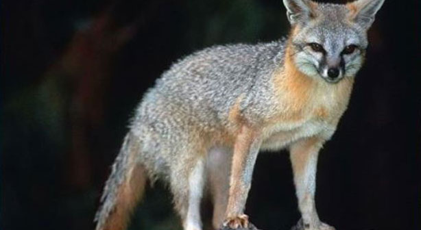 Seven wildlife attacks reported in January