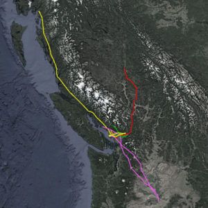 BETA - Bald Eagle Tracking Alliance