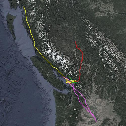 BETA – Bald Eagle Tracking Alliance