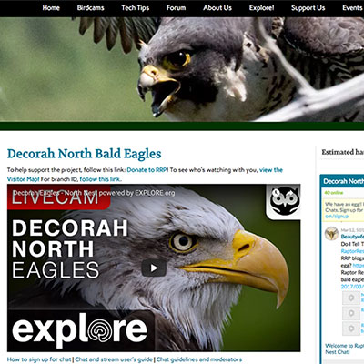 Decorah North Bald Eagles