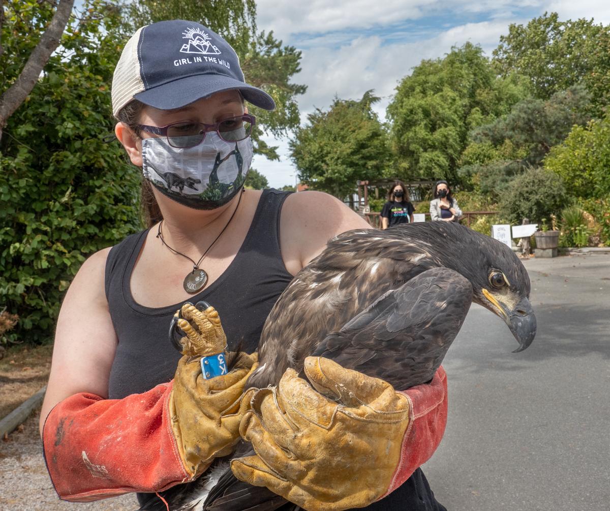 fledging eagle TERF14