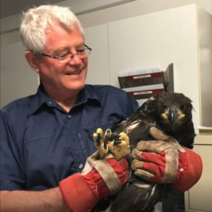 Mike Seear with rescued eaglet TERF11